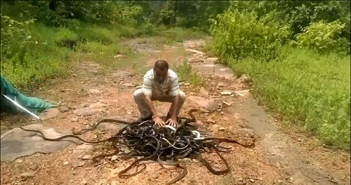 India's Snake Man Has Caught And Released Over 220,000 Snakes