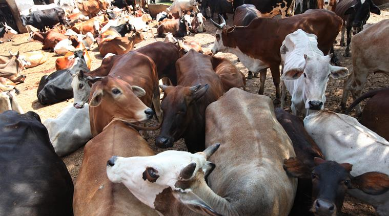 Tribal man killed by mob for suspected cow slaughter