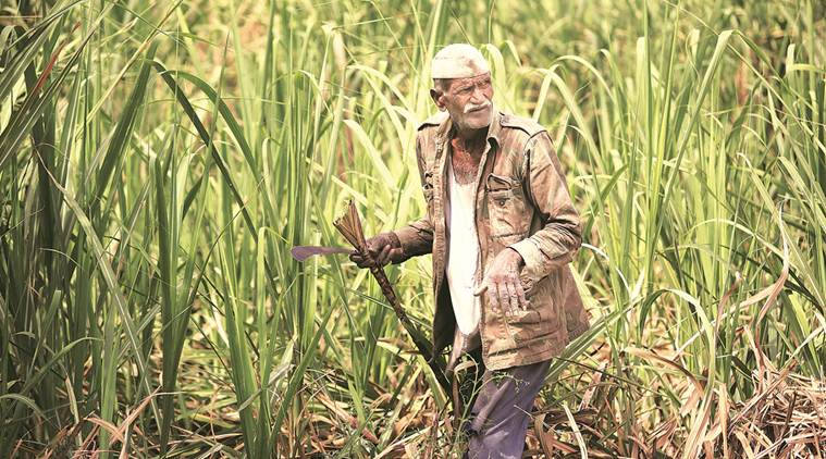 Western Uttar Pradesh Lok Sabha Polls May Not Be A Better Contest For BJP Government Due To Late Payments Of Farmers.