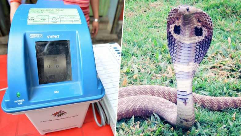 Snake Visits Election Polling Booth Of Kannur Kerala Found Inside VVPAT Machine
