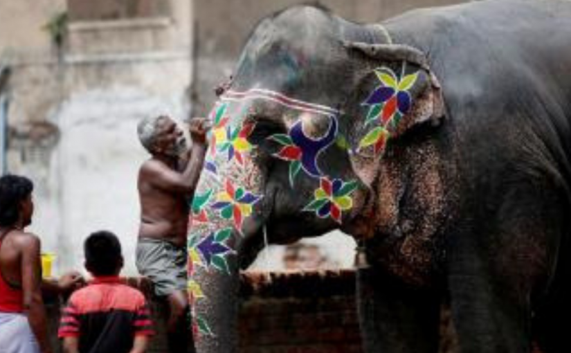 Elephant Transportation To Gujarat Discontinued Due To Heat Wave In Assam