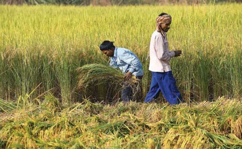Minimum Support Price For Paddy Increased And Approved In Bill Chaired By PM Modi