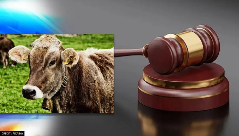 Allahabad HC Bats For Declaring Cow As India's National Animal; Seeks Laws For Protection